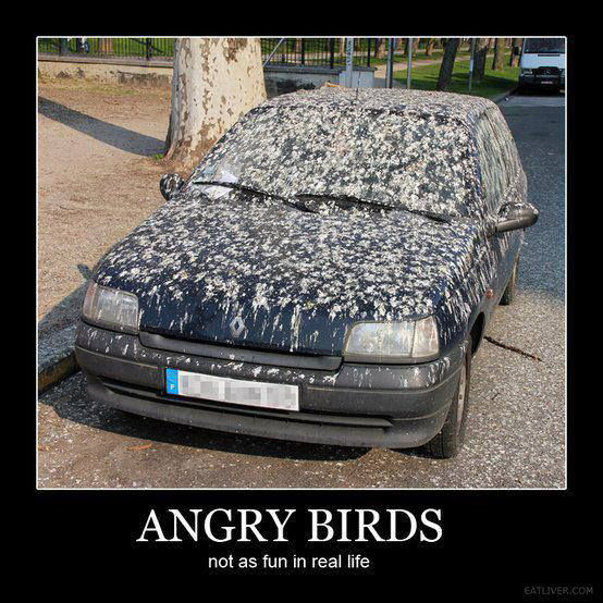 Angry Birds Car Wash Funny Meme