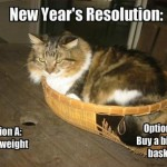 Cats New Years Resolution Funny Memes